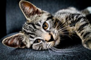 Katze auf dem Sofa Blog (1)