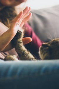 Katze auf dem Sofa Blog (2)