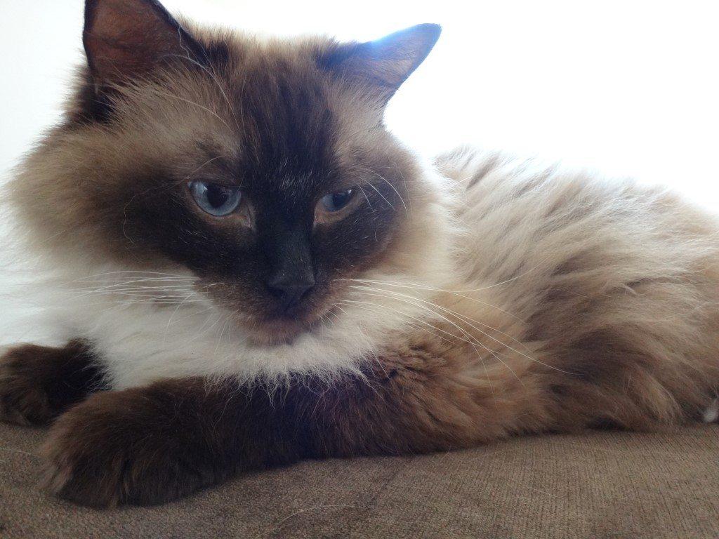 Katzen Urin Auf Dem Sofa Polsterreinigung Schnell Zuverlässig