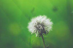 Allergiker atmen erleichtert auf