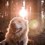 Flöhe bekämpfen Hund in der Natur